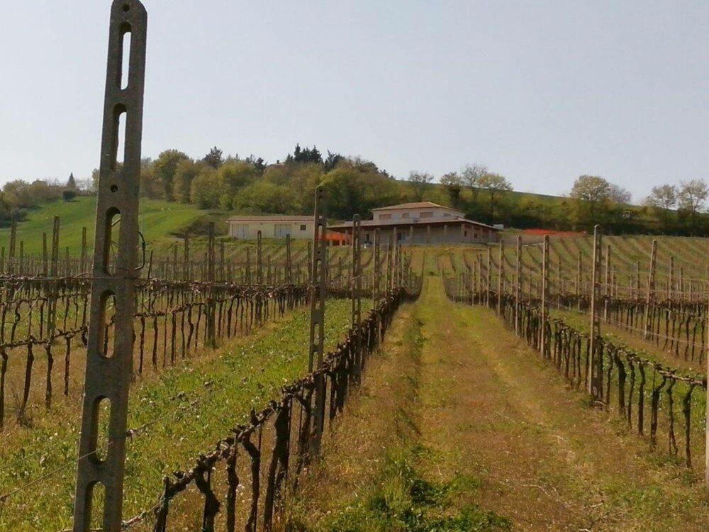 Premiata Azienda vitivinicola nel Fermano