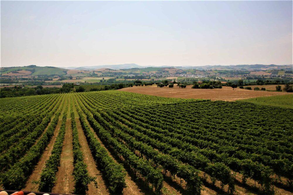 Prestigious winery for sale in Le Marche-Price Reduced