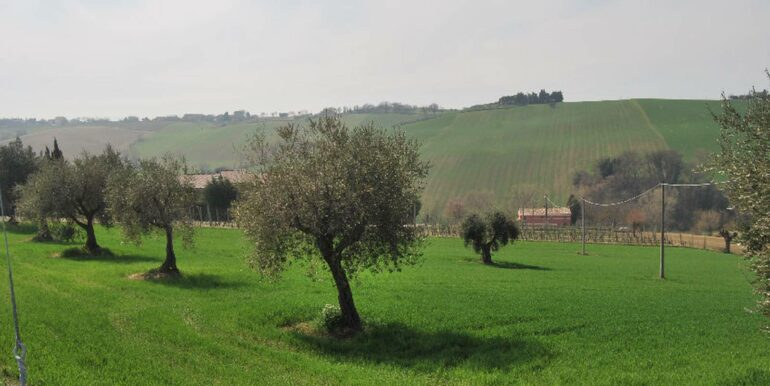 127_olive