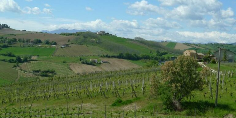Forte riduzione di prezzo. Azienda agricola con 22 ettari, casale e annessi. Montalto delle Marche