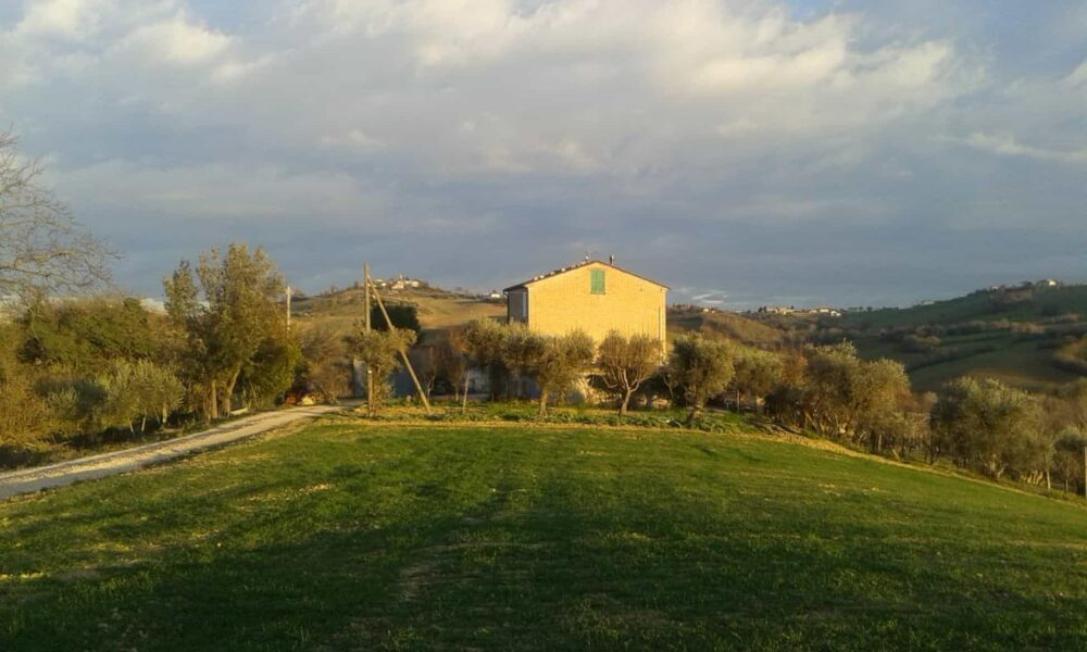 Habitable farmhouse with land, olive and fruit trees and annexes