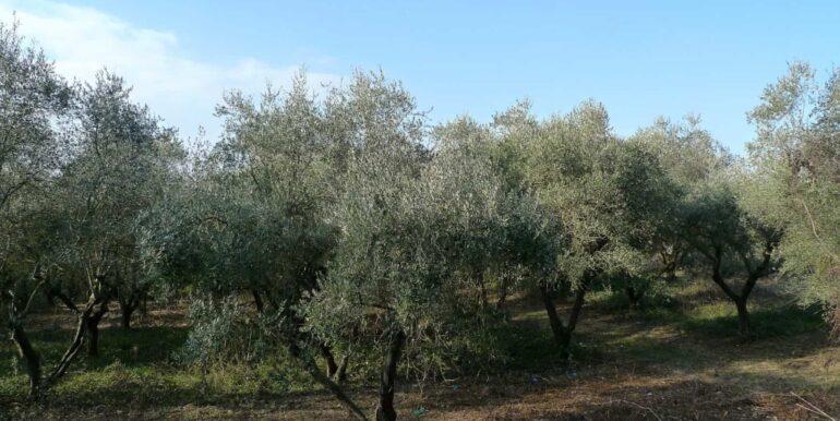 Casolare-con-uliveto-e-annesso-4-1740x960-c-center
